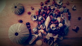Shells vintage Royalty Free Stock Photo