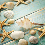 Shells on vintage shabby wood Stock Photos