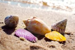 Shells in vivid colors on beach sand. Bubbles and bokeh picture image background stock photography