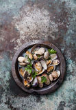 Shells vongole in metal dish Royalty Free Stock Image