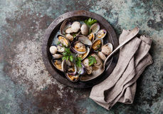 Shells vongole in metal dish Stock Photography