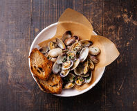 Shells vongole with parsley Stock Image