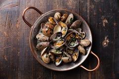 Shells vongole venus clams Royalty Free Stock Photos