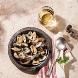 Shells vongole venus clams Royalty Free Stock Image