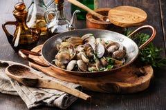 Shells vongole venus clams Stock Photography