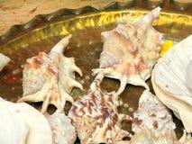 Shells voor verkoop in een vlooienmarkt stock afbeelding