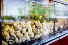 Shells voor verkoop, overzeese tweekleppige schelpdieren binnen aquarium in een restaurant stock afbeelding