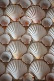 Shells. On a wall in botanical garden Edinburgh Stock Photography