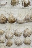 Shells on the wall. Shells, wall, detail of some seashells, decoration stock photos