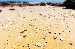Shells washed up on sand at Red Rocks Beach on sunny day, Phillip Island, Australia Stock Images