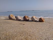 5 shells watching the sea stock photography