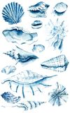 Shells. Watercolor hand drawn illustration vector illustration