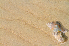 Shells and wave patterns on the sand Stock Photo