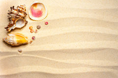 Shells on a wavy sand Royalty Free Stock Photos