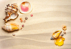 Shells on a wavy sand Stock Photo