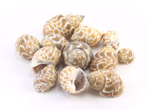 Shells on a white background. A scattering of seashells on a white backgroun Stock Photos