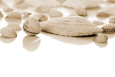 Shells on white background. Stock Photos