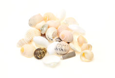 Shells in a white background Royalty Free Stock Photography