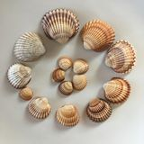 Shells on white backgrund in circle royalty free stock photos