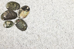 Shells in white sand Stock Images