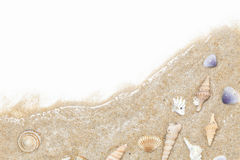 Shells on white sand background for holiday summer background. Royalty Free Stock Photos