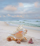 Shells on a White Sand Beach Royalty Free Stock Photos