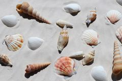 Shells on white sand, top view stock photo