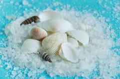 Shells on white sea salt royalty free stock photos
