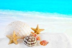 Shells On White Tropical Beach Stock Photos