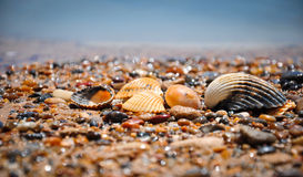 Shells on a wild beach (Sicily, Italy) Royalty Free Stock Image