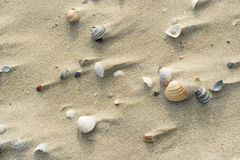 Shells at windy beach Royalty Free Stock Photography