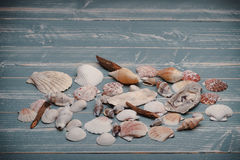 Shells and wood Stock Image