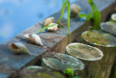 Shells on wooden logs Stock Photography