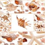Shells zeeschelpen Royalty-vrije Stock Foto's
