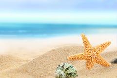 Shells zonnig strand Stock Foto's