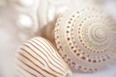 Shells1. Collection of sea shells Stock Images