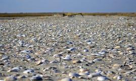 Shelly Beach Imagens de Stock Royalty Free