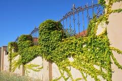 Shelly Limestone Fence met Metaalnet en vy Muur Ð † Stock Foto's
