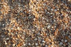Shelly strand van het overzees van Azov Stock Afbeelding