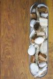 shels πέτρες Στοκ Εικόνα