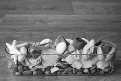 Shels e pietre Fotografie Stock
