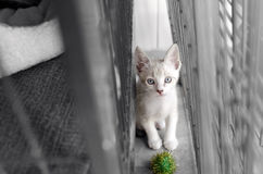 Shelter Animal Royalty Free Stock Images