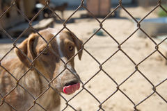 Shelter Dog Stock Photo