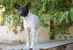 Shelter Dog Royalty Free Stock Image