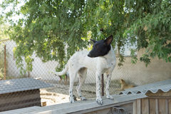 Shelter Dog Royalty Free Stock Images