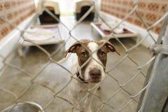 Free Shelter Dog Royalty Free Stock Photos - 75114768