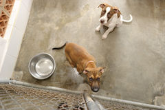 Shelter Dog stock image