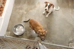 Shelter Dog Stock Image