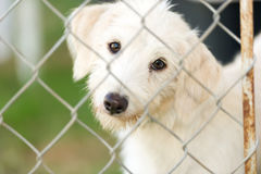 Shelter Dog. Is a cute rescue puppy dog looking and wondering if someone is going to take him home today Royalty Free Stock Photos
