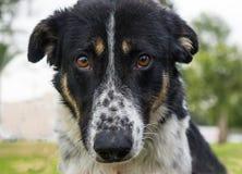 Shelter Dog, portrait royalty free stock photos